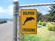 Cimg1880_dolphin_crossing