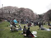 6sakura_crowds