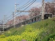 Sakuratrain2s