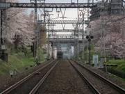 Sakuratrain4s