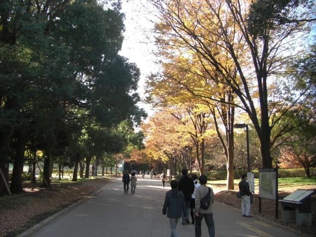 1kinuta_park_20121125_2