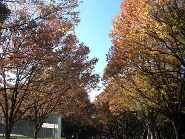 2kinuta_park_20121125