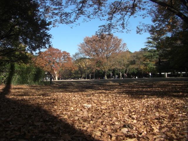 5kinuta_park_20121125